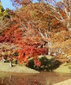 用作公園1